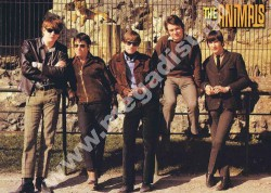 PLAKAT THE ANIMALS - 1966 Promo (50cm x 70cm)